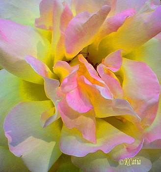 Seattle's Rose by Katia Creole Art