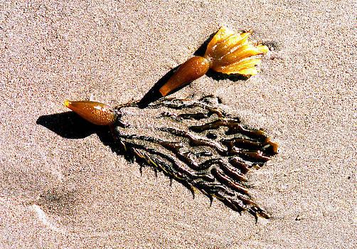 Seaweed by Rebecca West