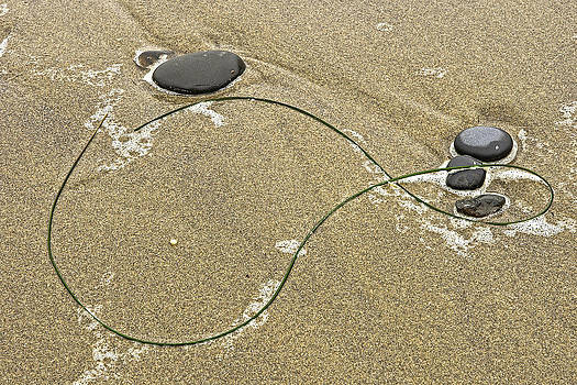 Seaweed Sand and Stones by Judi Baker