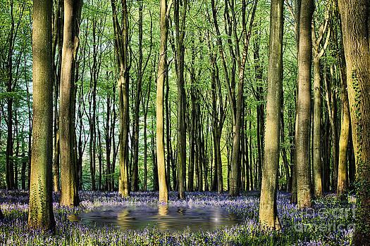 Simon Bratt Photography LRPS - Secret pond in bluebell woods