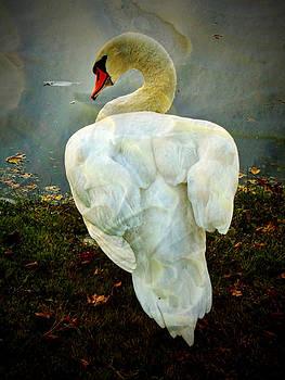 Pamela Phelps - Secretive Swan