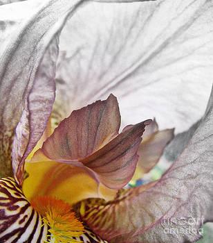 Secrets of Iris by Nancy Dole McGuigan