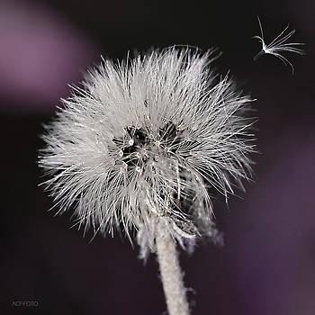 Seeds by Ann-Charlotte Fjaerevik