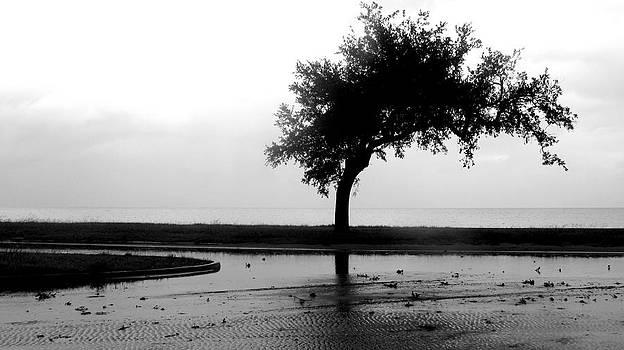 Seeking Balance by Debora PeaceSwirl DAngelo