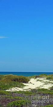 Seeking the Beach by Cindy Bettinger