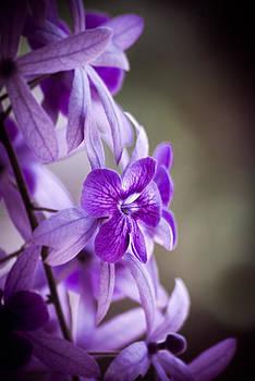 Sensational Purple by William Shevchuk