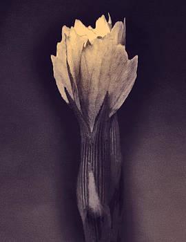 Sepia Flower by Ann-Charlotte Fjaerevik