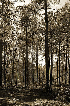 Carolyn Stagger Cokley - Sepia Forest 4014