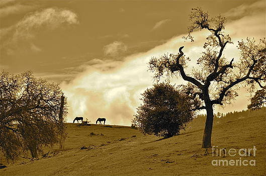 Sepia of Two Horses by Amy Fearn