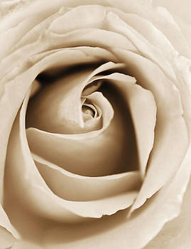 Marilyn Hunt - Sepia Rose