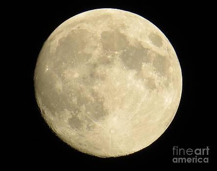 Judy Via-Wolff - September Moon