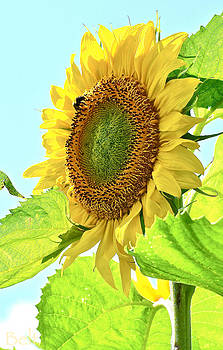 Christine Belt - September Sunflower No. 2