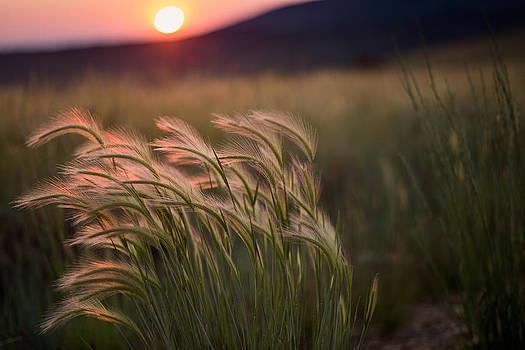 Serene Sunset by Linda Storm