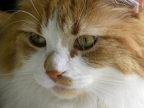 Julie Palencia - Serious Gato 3