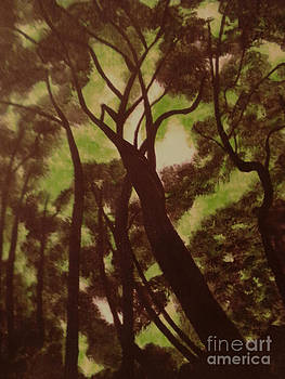 Shade Trees by Erica  Darknell