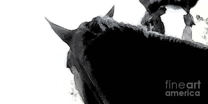 Linda Knorr Shafer - Shades Of Gray