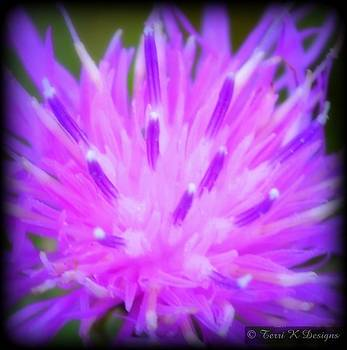 Shades of purple by Terri K Designs
