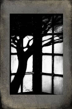 Shadow by Bobbi Feasel