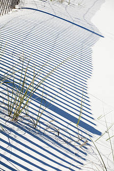 Shadow Grass 2 by John Clemmer Photography