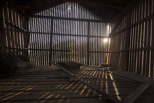 Shadow Lines by Chris Burke