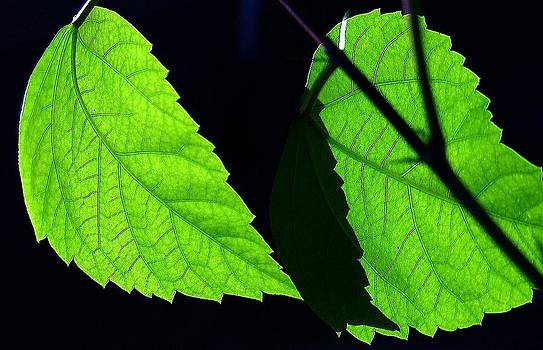 Shadow on Green Leaves by Don Bangert