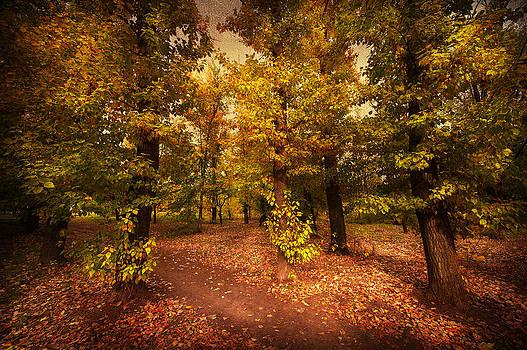 Svetlana Sewell - Shadows of Forest