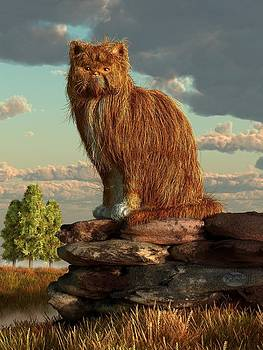 Daniel Eskridge - Shaggy Cat