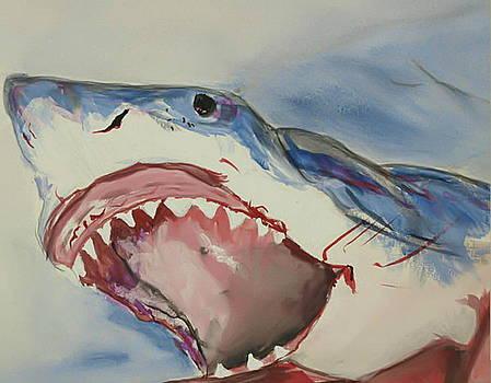 Shark by Raquel Ventura
