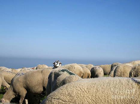 BERNARD JAUBERT - Sheep