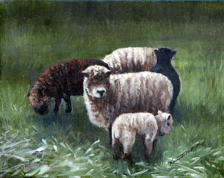 Sheep In The Meadow  by Rosie Morgan