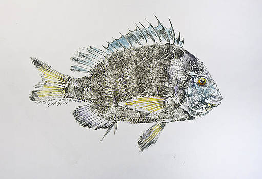 Sheepshead by Nancy Gorr