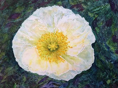 Sheer Beauty by Carol Warner