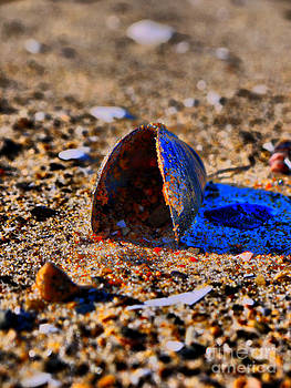 Shell in sand by Nancie DeMellia