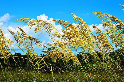 Shell Island Breeze by Duane King