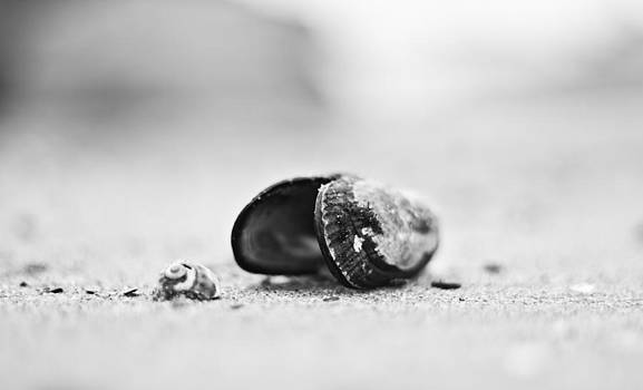 Shell on the beach by Andrew Raby