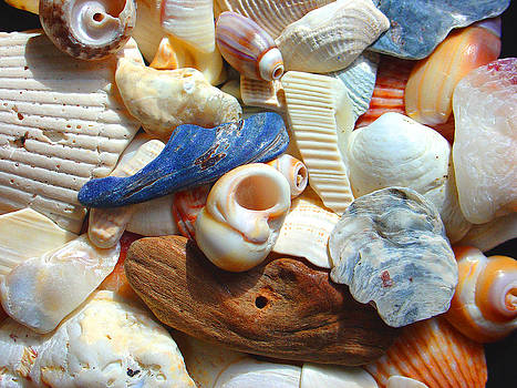 Shells from the Seashore by Jonathan Androwski