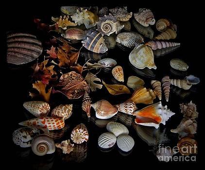 Shells in Fall Sun by Andrey Kuznetsov