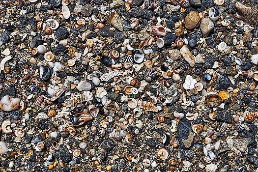 Steven Ralser - Shells on Beach - Australia