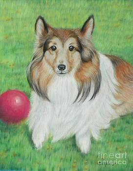 Sheltie Collie by Ace Robst Jr