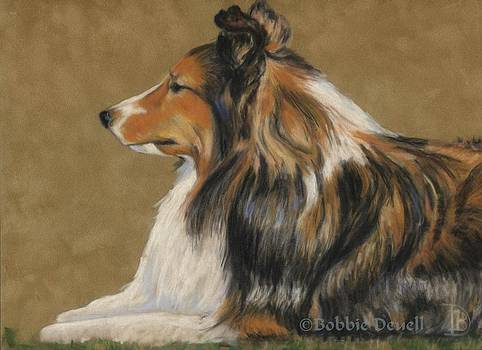 Sheltie Profile by Bobbie Deuell
