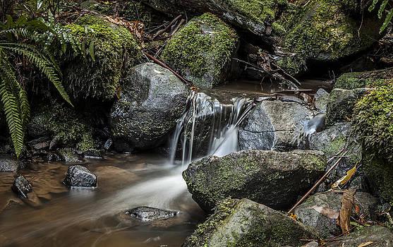 Sherbrooke Creek by Shari Mattox