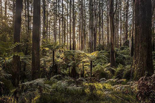 Shari Mattox - Sherbrooke Forest