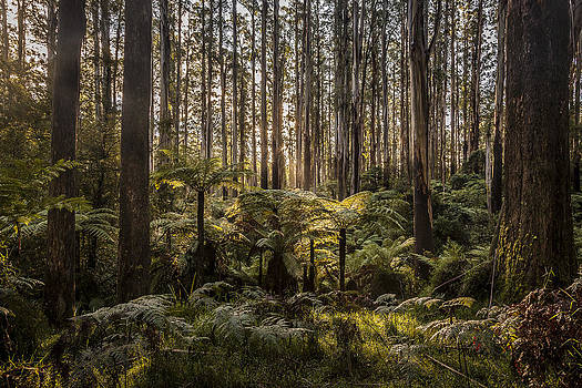Sherbrooke Forest by Shari Mattox