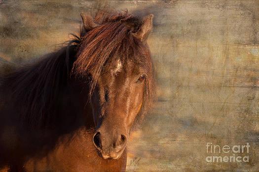 Michelle Wrighton - Shetland Pony at Sunset
