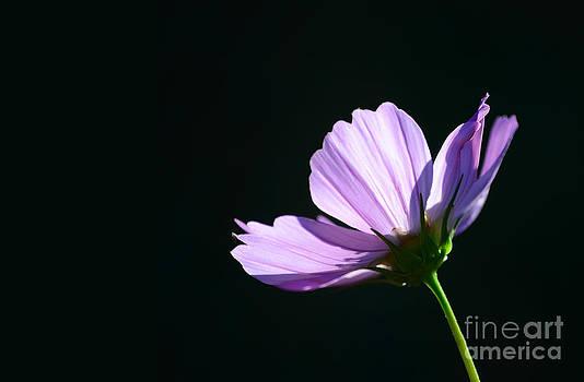 Shine on Me by Tiffany Rantanen