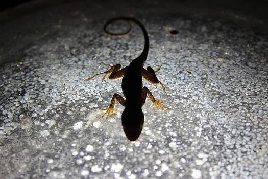 Shinning Lizard by Mark Perez