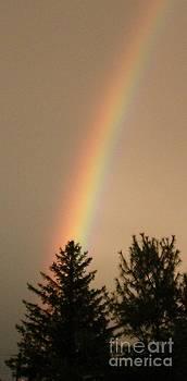 Gail Matthews - SHOOTING RAINBOW silhouettes trees