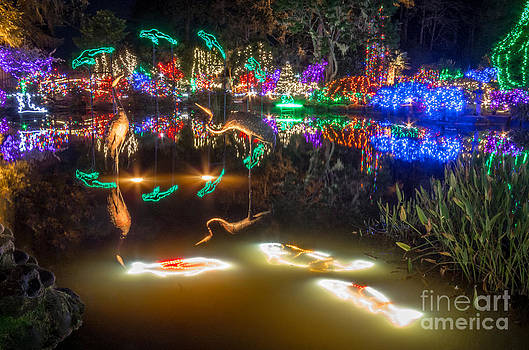 Shore Acres Christmas Lights by Kristal Talbot