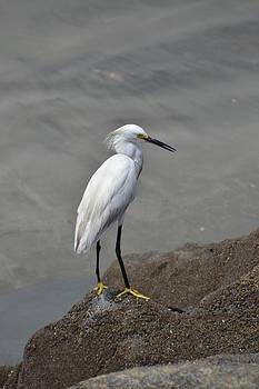 Shore Bird by Jennifer Kelly
