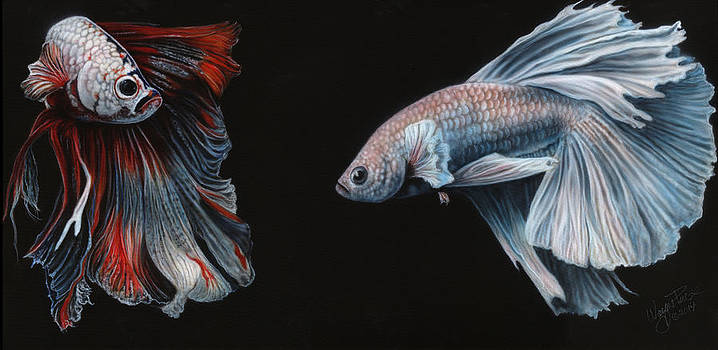 Siamese Fighting Fish  by Wayne Pruse